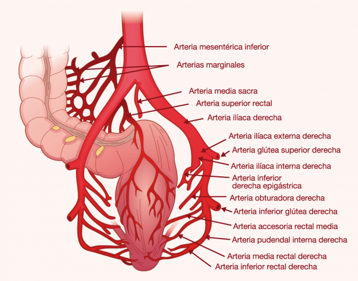 Bowel colon infographic graphic design illustration